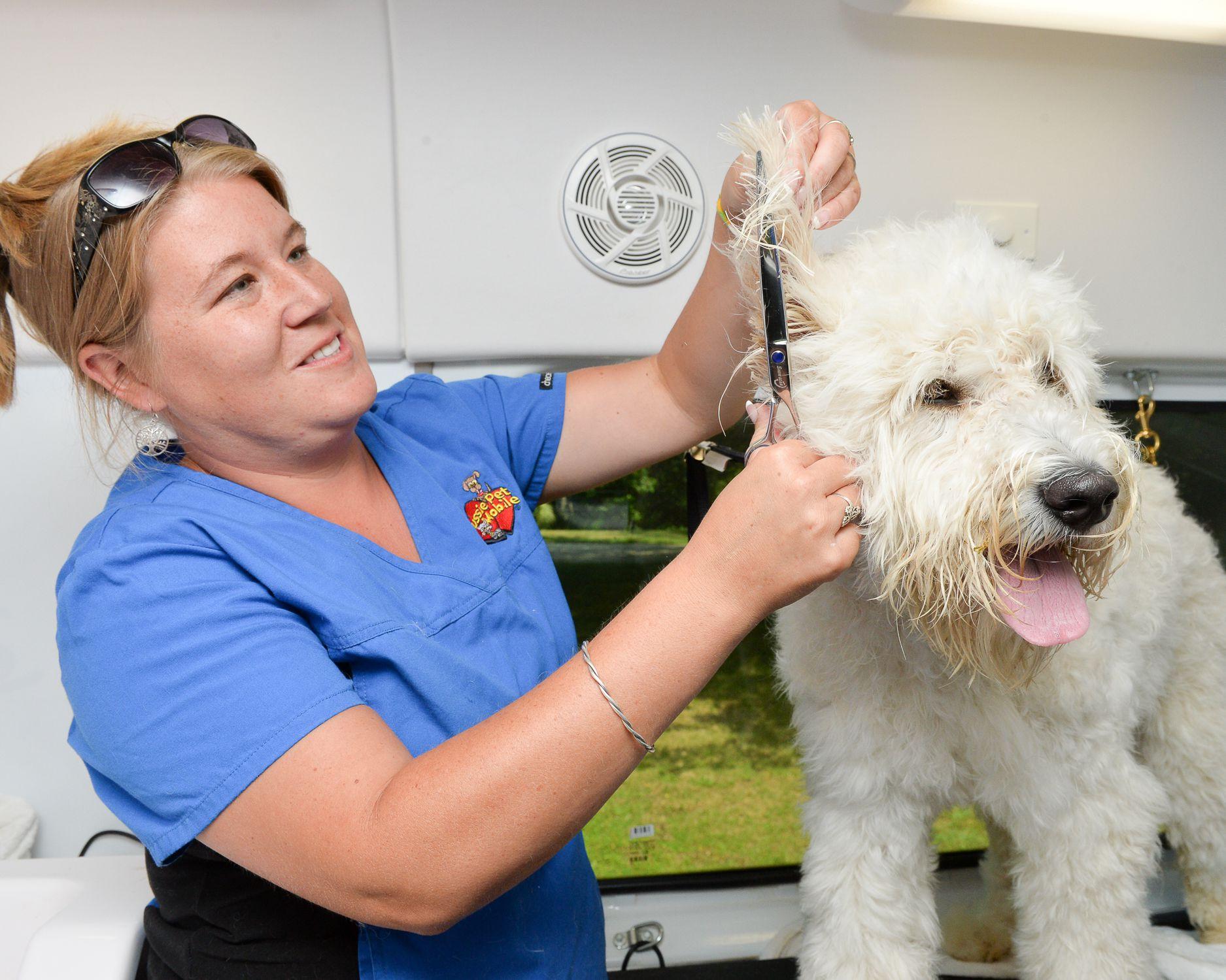 Dog Grooming Mobile Melbourne Fl